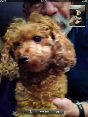 Dogs FaceTiming